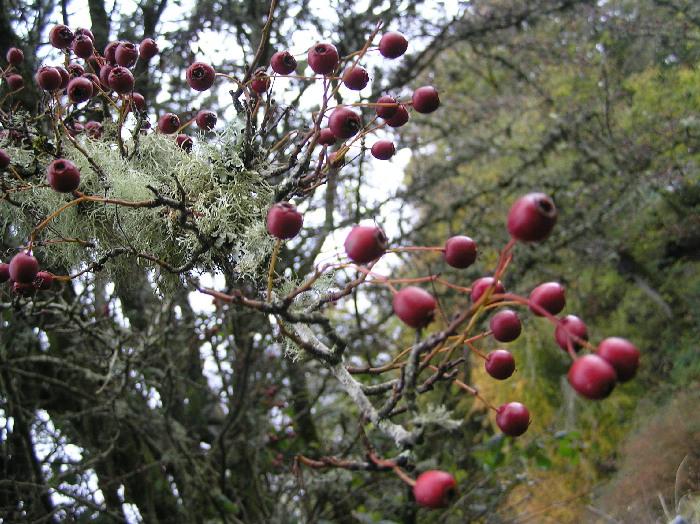 Photos were taken of berries